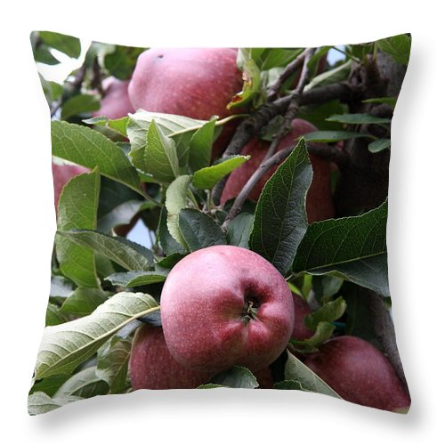 Apples Throw Pillow featuring the photograph Eve's First Choise by Christiane Schulze Art And Photography