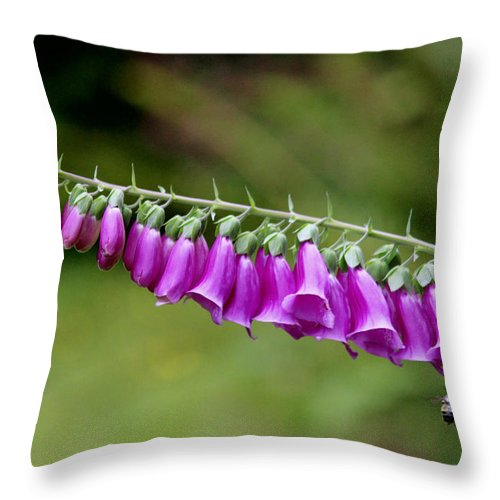 Flowers Throw Pillow featuring the photograph Foxglove Went Horizontal by Kym Backland