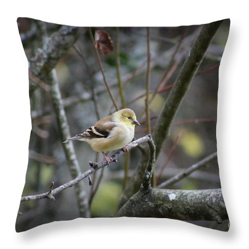 Christmas Throw Pillow featuring the photograph Goldfinch by Leone Lund