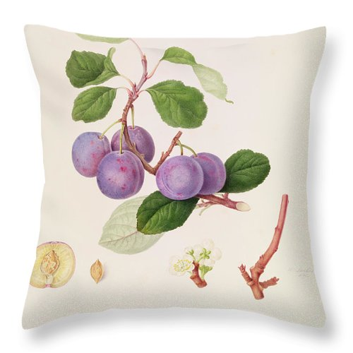 Fruit; Plums; Blossom; Branch; Leaves; Cross-section; Botanical Illustration Throw Pillow featuring the painting La Royale Plum by William Hooker