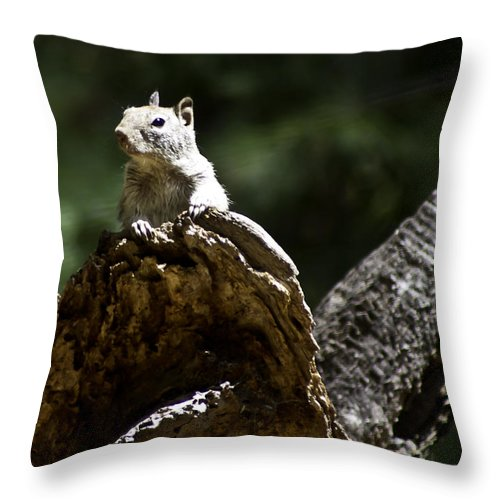 Outdoors Throw Pillow featuring the photograph My Friend by Brian Williamson