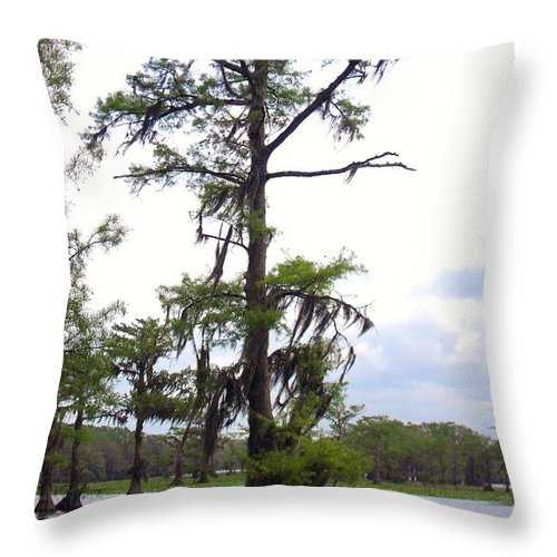 Cypress Trees Throw Pillow featuring the photograph Cypress Trees by Donna Wilson