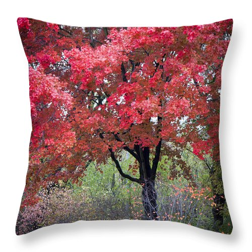Scenic Throw Pillow featuring the photograph 0277 Blazing Red by Steve Sturgill