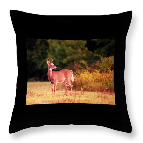 Deer Throw Pillow featuring the photograph 070406-58 by Mike Davis