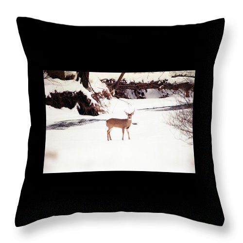 Whitetail Deer Throw Pillow featuring the photograph 080706-89 by Mike Davis