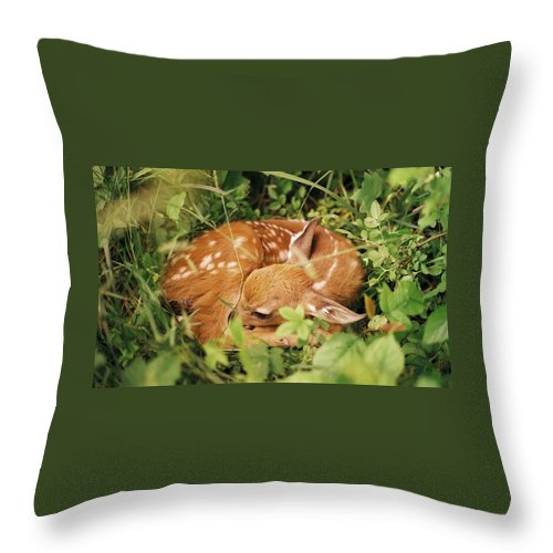 Deer Throw Pillow featuring the photograph 080806-17 by Mike Davis