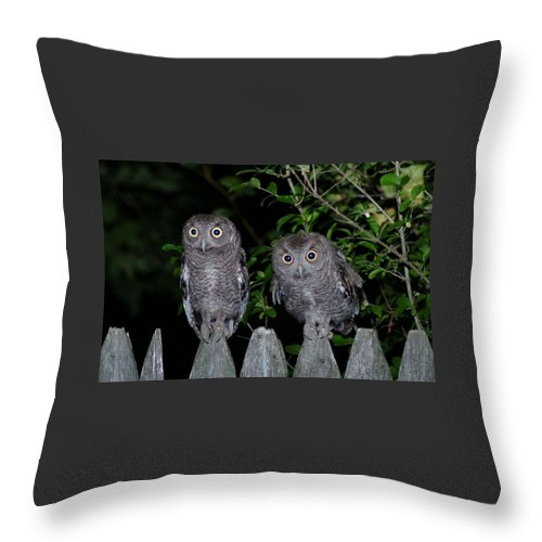 Owls Throw Pillow featuring the photograph 081609-45  Harpo And Groucho by Mike Davis