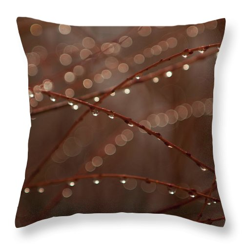 Shadow Throw Pillow featuring the photograph A Close-up Of Dew Drops On Branches by Christopher Kontoes