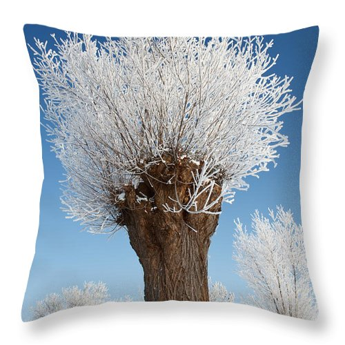 Salicaceae Throw Pillow featuring the photograph A Frosted Willow On A Very Cold And Bright Winter Day by Roeselien Raimond