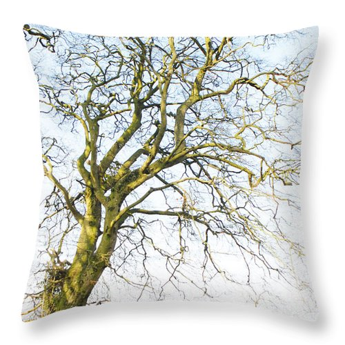 Macro Throw Pillow featuring the photograph Tall Tree Shadows by Dave Byrne