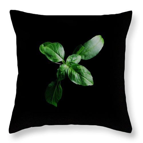 Herbs Throw Pillow featuring the photograph A Sprig Of Basil by Romulo Yanes