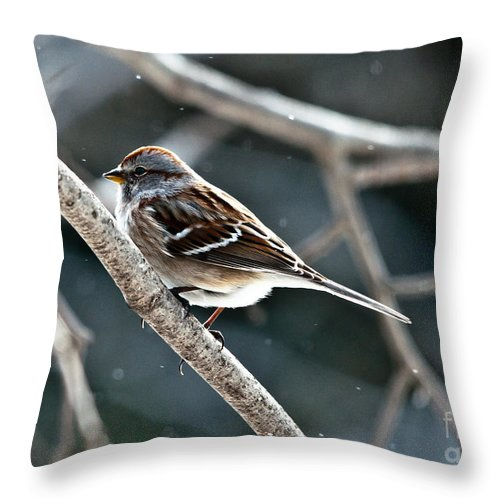 Landscapes Throw Pillow featuring the photograph American Tree Sparrow by Cheryl Baxter
