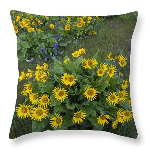 America Throw Pillow featuring the photograph Arrowleaf Balsamroot And Lupine by John Shaw