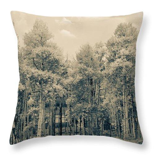Aspens Throw Pillow featuring the photograph Aspens by Southwindow Eugenia Rey-Guerra
