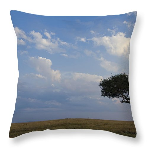 Africa Throw Pillow featuring the photograph Balanites Tree by John Shaw