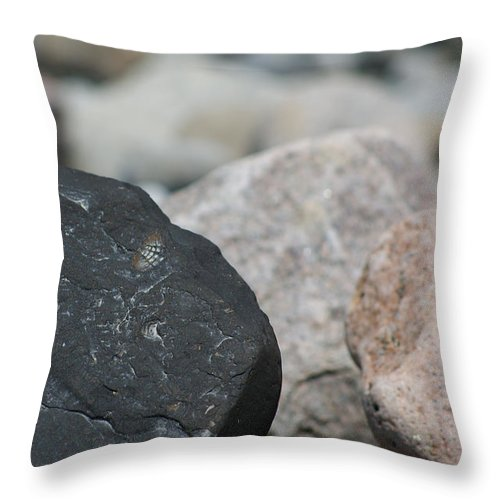 Lahay Creative Throw Pillow featuring the photograph Beach Fossil by Andrew Lahay