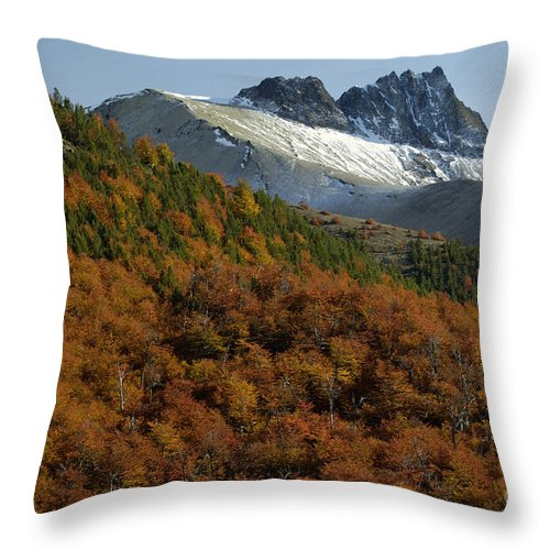 Nothofagus Throw Pillow featuring the photograph Beech Forest, Chile by John Shaw