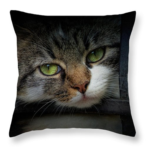 Animal Throw Pillow featuring the photograph Behind Bars by Jai Johnson