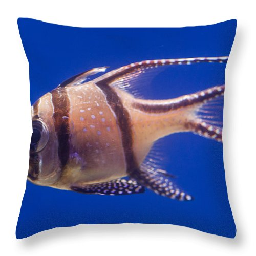 Fish Throw Pillow featuring the photograph Bengal Cardinal Fish by Shaun Wilkinson