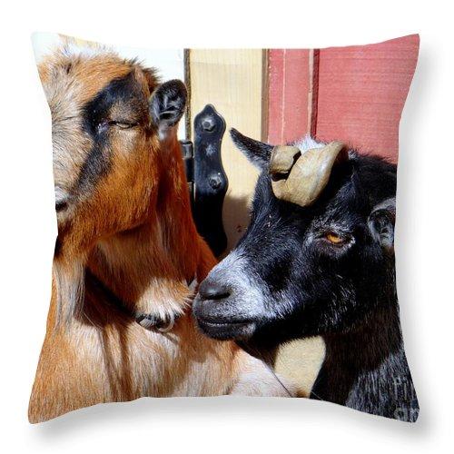 Animals Throw Pillow featuring the photograph Best Friends by Ed Weidman