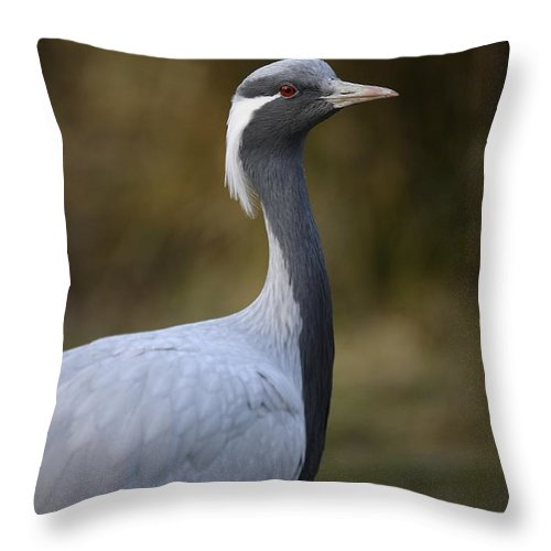 Captive Bird Throw Pillow featuring the photograph Bird by Jenny Potter