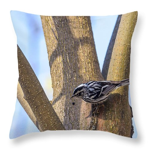 Animal Throw Pillow featuring the photograph Black And White Warbler by Jack R Perry