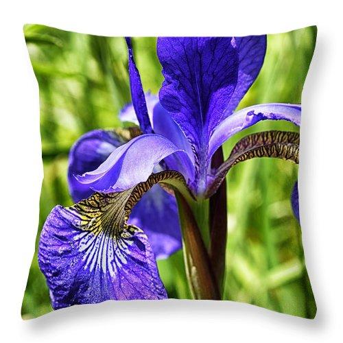 Iris Throw Pillow featuring the photograph Blood Iris by Thomas R Fletcher