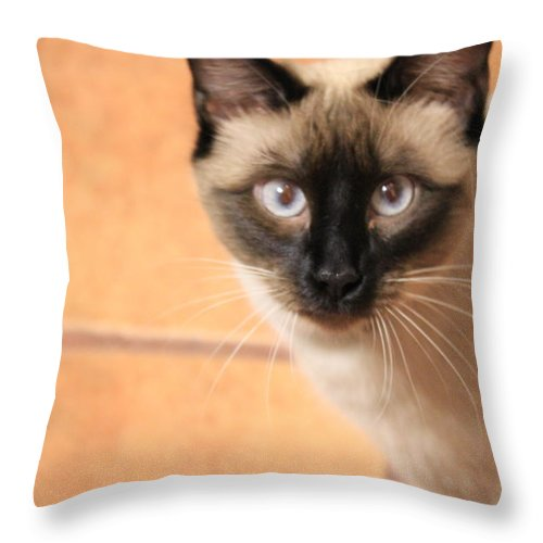 Animal Throw Pillow featuring the photograph Blue by Dee Oviatt-Thames
