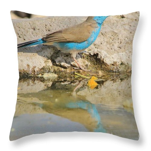 Africa Throw Pillow featuring the photograph Blue Waxbill Reflection by Hermanus A Alberts
