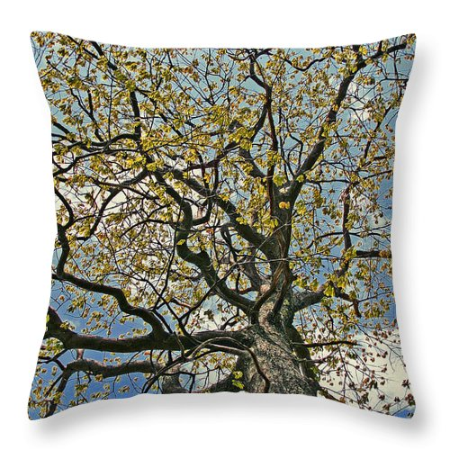 Maine Throw Pillow featuring the photograph Branches by Laura Mace Rand