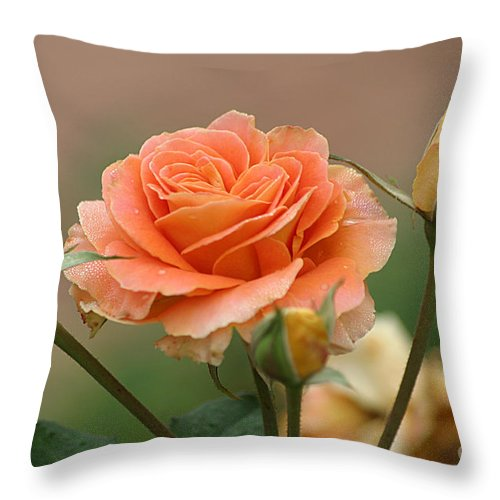 Roses Throw Pillow featuring the photograph Brass Band Roses by Living Color Photography Lorraine Lynch