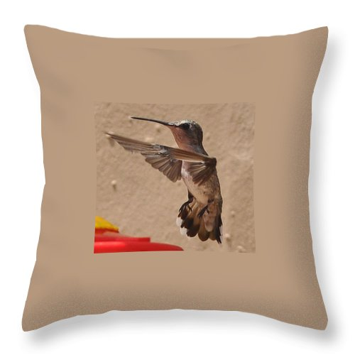 Hummingbird Throw Pillow featuring the photograph Broadtail Landing by Jay Milo