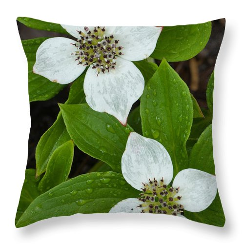 Bunchberry Throw Pillow featuring the photograph Bunchberry by John Shaw