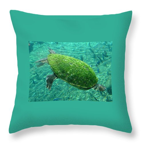 Turtle Throw Pillow featuring the photograph Busch Turtle by David Nicholls