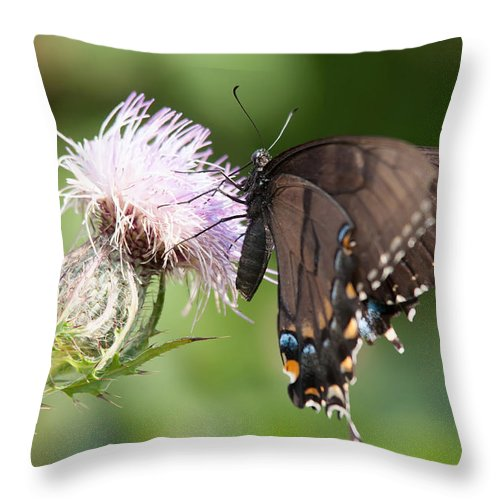 Animal Throw Pillow featuring the photograph Butterfly by Alex Grichenko