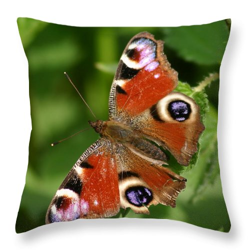 Butterfly Throw Pillow featuring the photograph Butterfly by Gillian Dernie