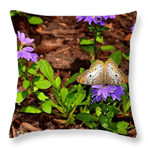 Butterfly Throw Pillow featuring the photograph Butterfly On Flower by Amy Lucid