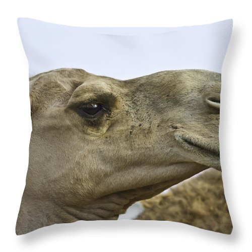 Outdoors Throw Pillow featuring the photograph Camel by Brian Williamson