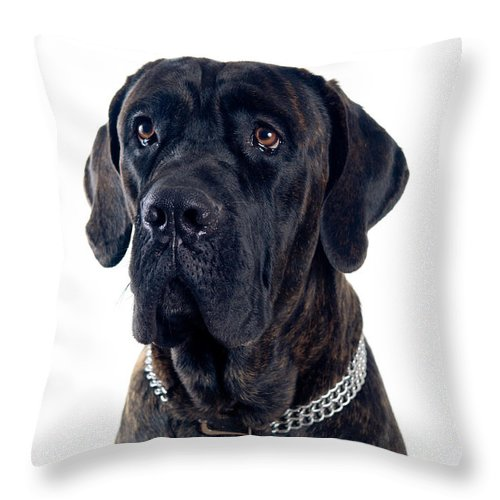 Animal Throw Pillow featuring the photograph Cane-corso Dog Portrait by Viktor Pravdica