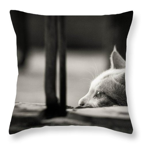 Cat Throw Pillow featuring the photograph Cat by FL collection