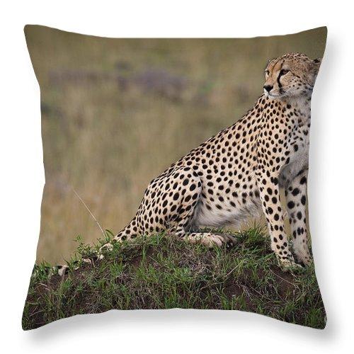 Acinonyx Jubatus Throw Pillow featuring the photograph Cheetah On Termite Mound by John Shaw