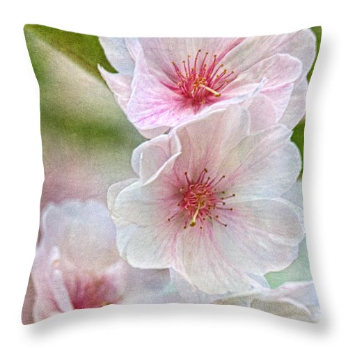 Cherry Blossoms Throw Pillow featuring the photograph Cherry Floral by Theo O'Connor