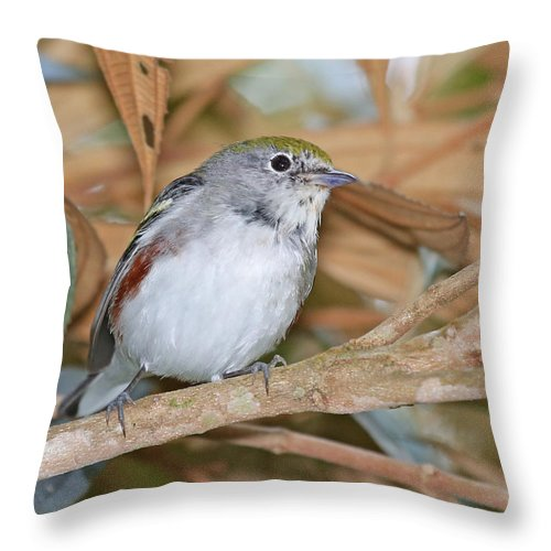 Nature Throw Pillow featuring the photograph Chestnut-sided Warbler by Mike Dickie