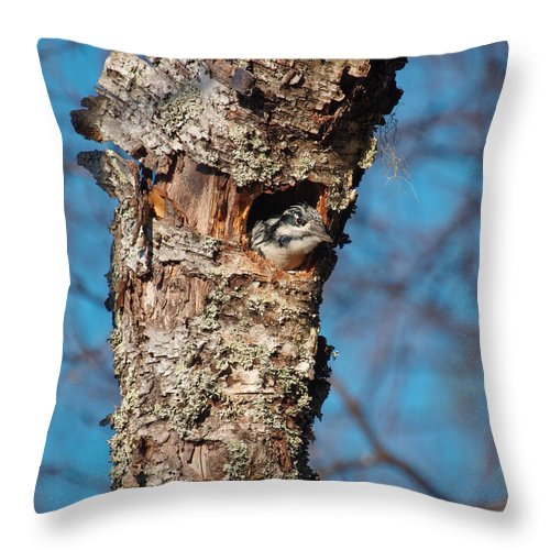 Finland Throw Pillow featuring the photograph Cleaning Up For Winter by Jouko Lehto