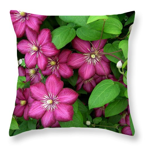 Penny Lisowski Throw Pillow featuring the photograph Clematis by Penny Lisowski