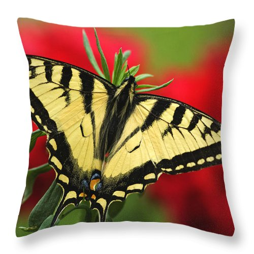 Daytime Throw Pillow featuring the photograph Close Up Of A Canadian Tiger by Greg Martin