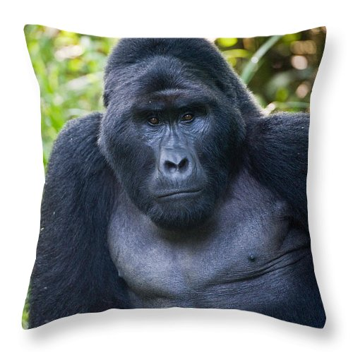 Photography Throw Pillow featuring the photograph Close-up Of A Mountain Gorilla Gorilla by Panoramic Images