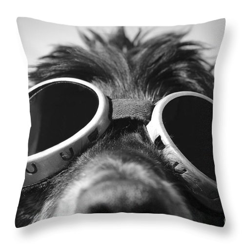 Dog Throw Pillow featuring the photograph Cool Dog by Mats Silvan