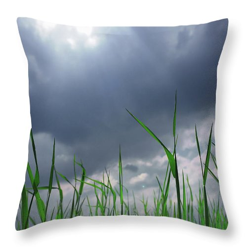 Thunderstorm Throw Pillow featuring the photograph Corn Plant With Thunderstorm Clouds by Silvia Otte
