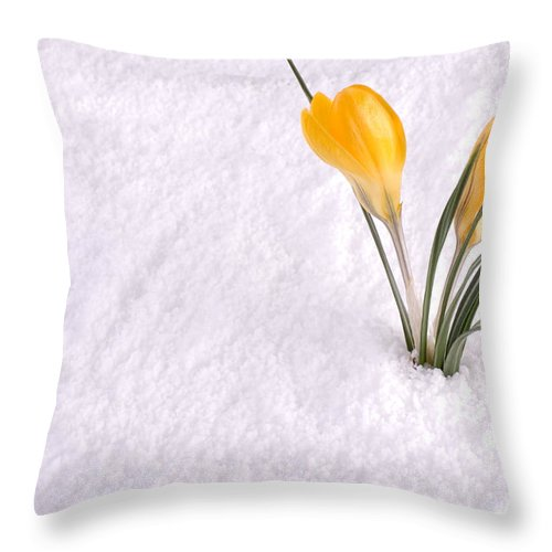 Background Throw Pillow featuring the photograph Crocus In Snow Yellow by SAJE Photography